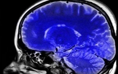 El cervell triú.Nou article a l'Indicador